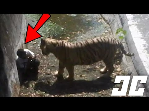 10 Most Shocking Zoo Accidents - animals and people meet face to face