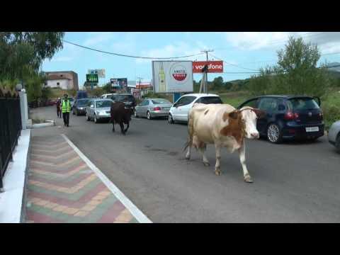 通關前的牛牛