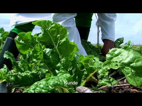 Celebrating the Kenyan Farmer: Phyllis Mwinza