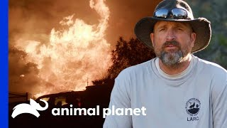 450 Animals Saved From California Wildfire   Wolves and Warriors by Animal Planet