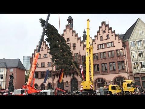 F.A.Z.-Adventskalender: Woher kommt der Frankfurter Weihnachtsbaum?