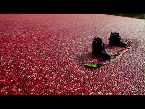 Winch Surfing A Cranberry Bog