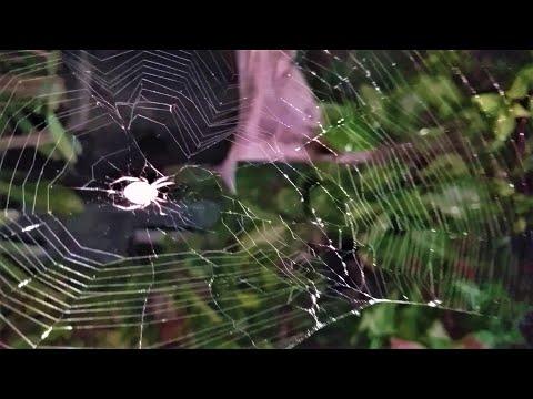 Spider Web in My Garden #Shorts
