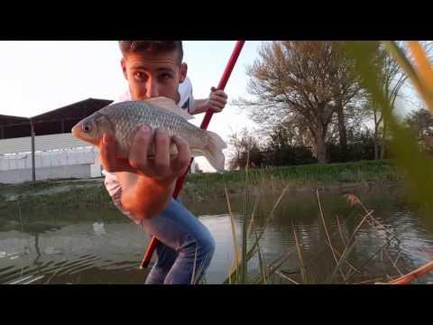 pesca in canale con canna fissa 9m carassi e carpa