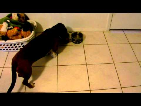 Noodle and Doodle Show – Heavy Drinking Problem