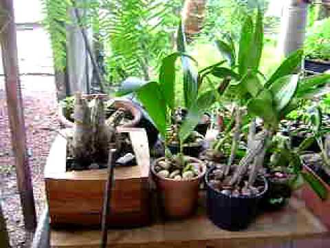 Orquídeas em casa