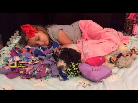 5-Year-Old Girl With Arthritis Gets Donated Dog To Help Her Walk