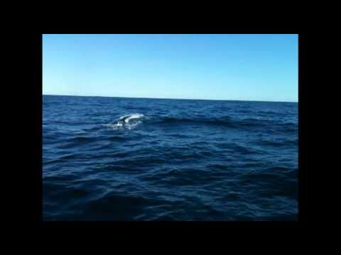 video mozzafiato – il passaggio delle balene a lampedusa