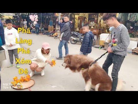 Mật đi chợ xuân gây cười khắp chợ vì quá đáng yêu cùng Cò và Mai - Mật Pet Family - Thời lượng: 10 phút.