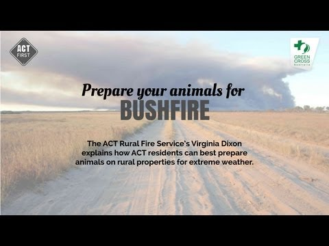 Prepare your animals for a bushfire on rural properties