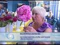 Новгородский селекционер вывел новый сорт пиона