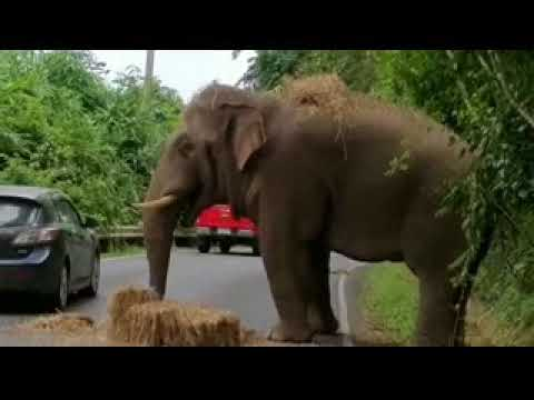 How Toll Be Paid When Drive Pass Elephant Area