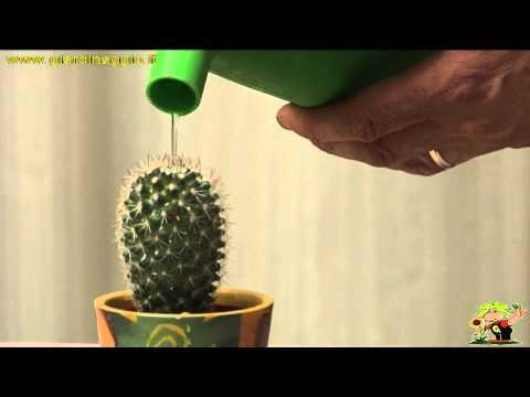 coltivazione mamillari