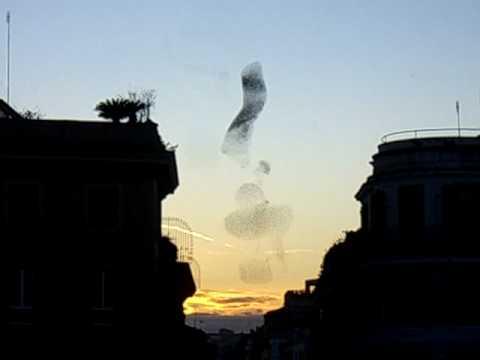 連科學家都難以解釋的現象,到底是什麼東西組成的龍捲風!?