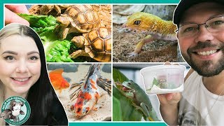 Day In The Life // New Baby Tortoise & Feeding All My Pets by Solid Gold Aquatics