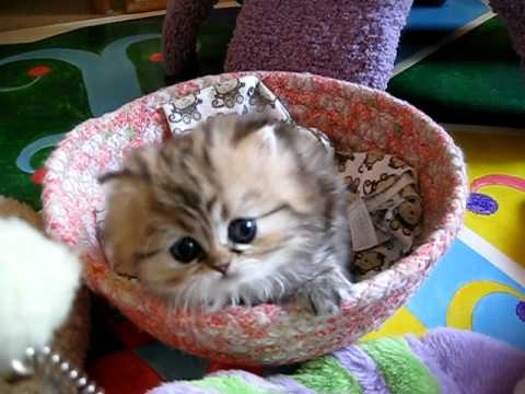 Kittensyoutube on And Of Course There Ll Be Other People S Kittens