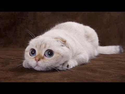 Gatos Chistosos - Perros Chistosos - Videos Graciosos #9