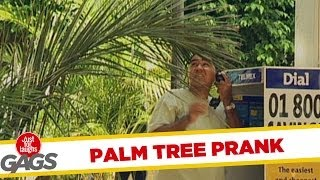 Annoying Palm Tree Gag