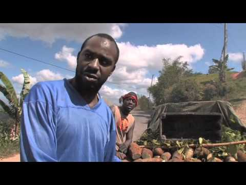 Farming In Jamaica