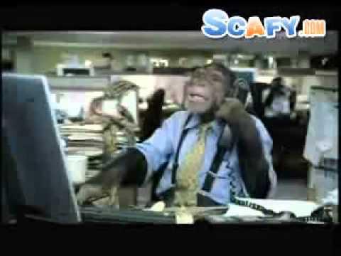 scafy -