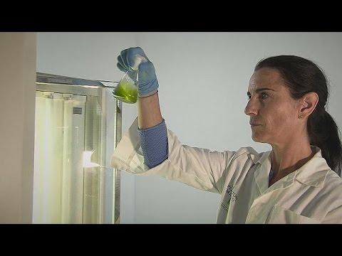 Μικροάλγη: Πράσινος χρυσός στο νερό της θάλασσας – futuris