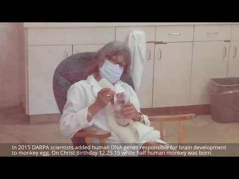First Human Animal Hybrid Born In USA: DARPA Scientists Mixed Human DNA To Monkey. Cute Abomination