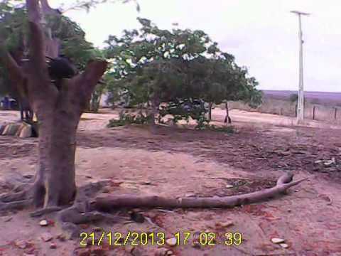 Pegando mangas na casa do meu Vô em Araripe-ce