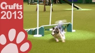 Agility - Championship Final - Crufts 2013