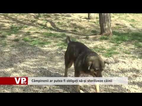 Câmpinenii ar putea fi obligați să-și sterilizeze câinii