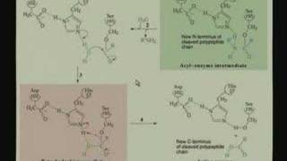 Lecture - 11 Enzyme Mechanisms II
