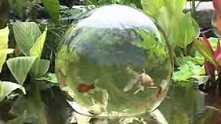 "The Add-A-Sphere Allows Your Fish To ""Swim"" Above The Water Surface - Very Cool"