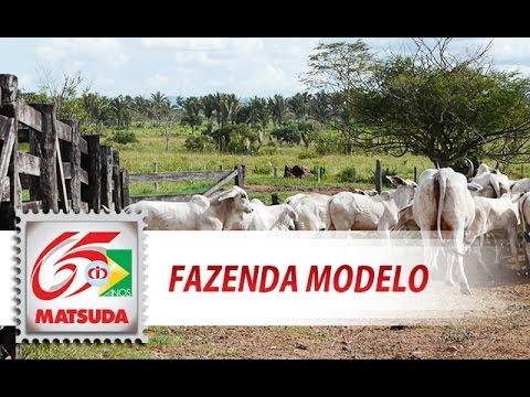 Fazenda Modelo (Rio Maria - PA)