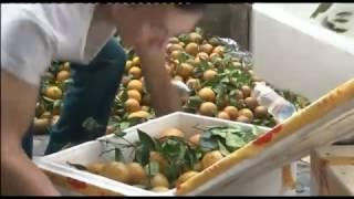 Tiếp tục bắt giữ, tiêu hủy hơn 1,3 tấn hoa quả nhập lậu từ Trung Quốc