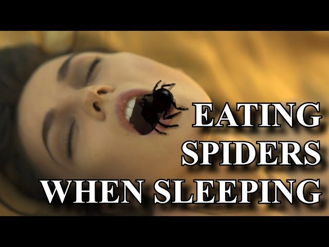 How Do Spiders Sleep