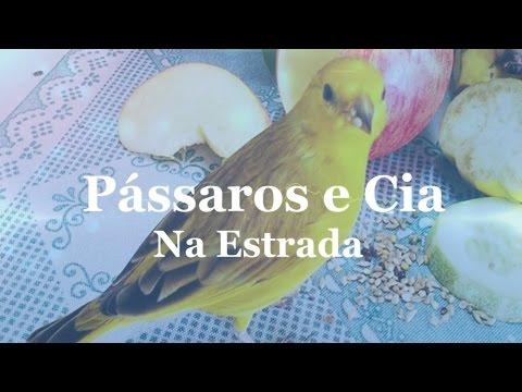 Programa Pássaros & Cia Na Estrada