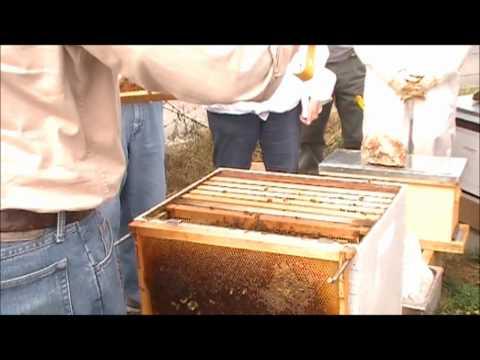 Inspect apiary.wmv