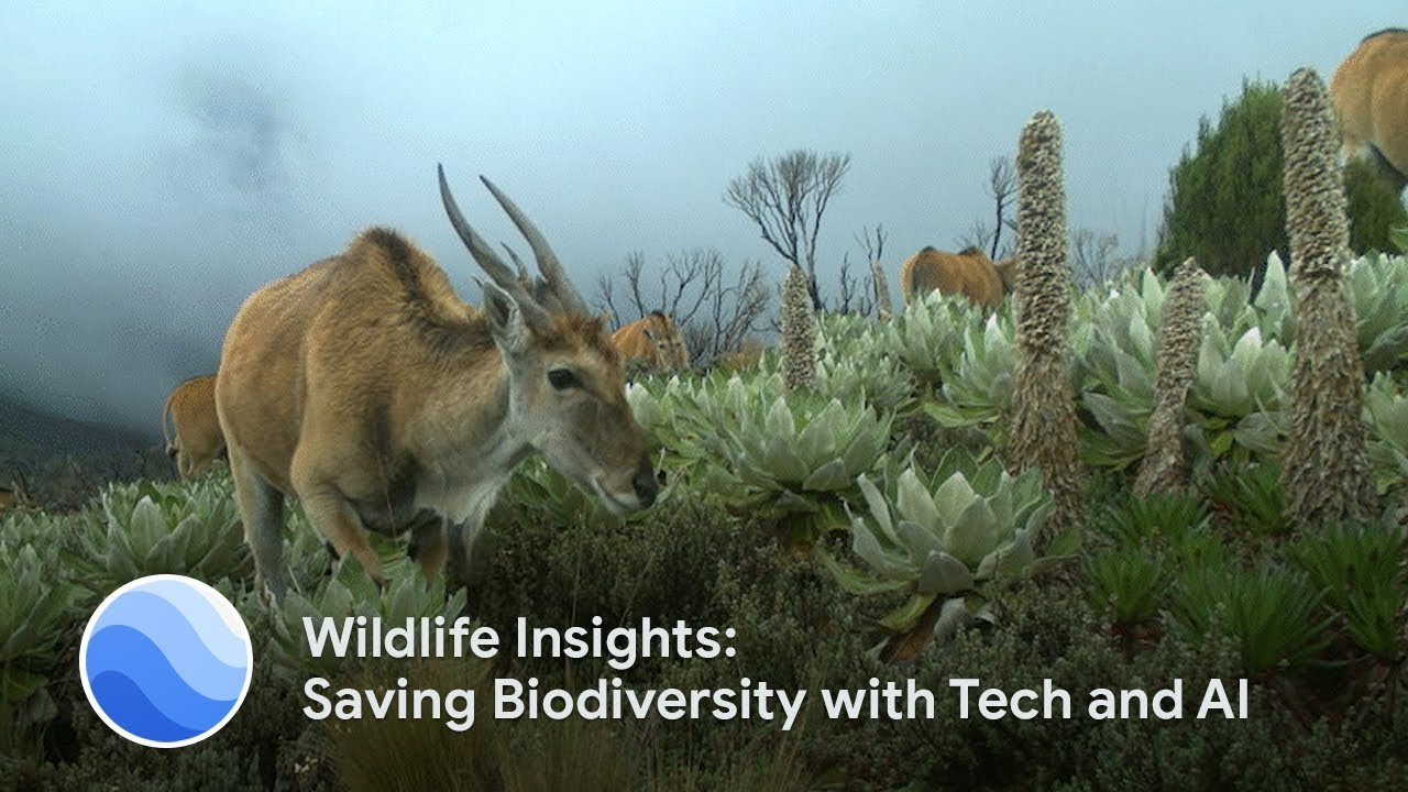 Wildlife managers at Instituto Humboldt take advantage of a new AI-enabled tool for processing wildlife data.