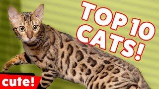 animale faze noi pisici