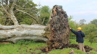 A Gale Uprooted This Tree And Scientists Discovered Something Shocking Beneath It by Did You Know Animals?