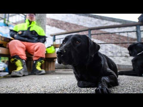 Nach Erdbeben in Taiwan: Mit Rettungshunden gegen die Zeit