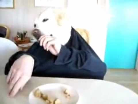 سكس كلب