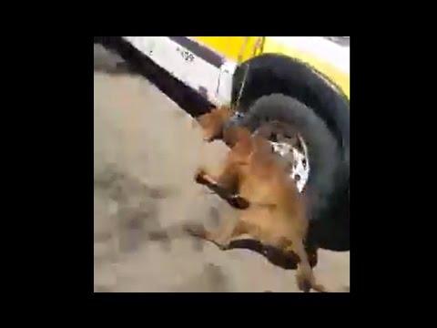 Empleado de Defensa Civil arrastró a un perro con una camioneta — Indignante