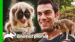 Dr. Evan Meets One Of The World's Most Fascinating Primates | Evan Goes Wild by Animal Planet
