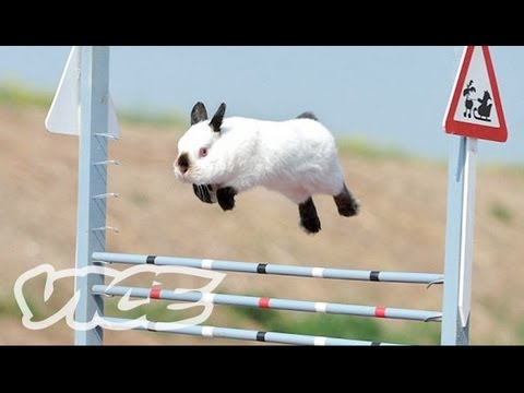 Rabbit Jumping Competition (2012)
