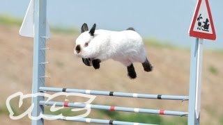 Cute Bunny Jumping Competition!