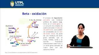 UTPL METABOLISMO DE LÍPIDOS [(GESTIÓN AMBIENTAL)(BIOQUÍMICA)]