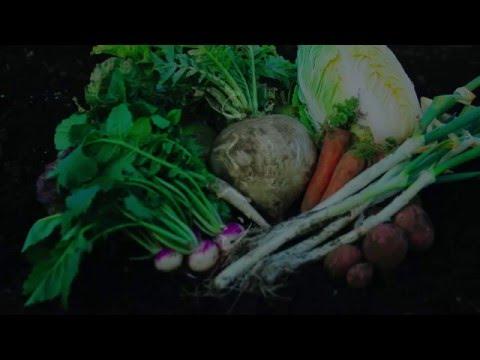 国分寺三百年野菜「こくベジ」