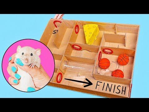 Un divertido laberinto para la rata - mascota de Sam