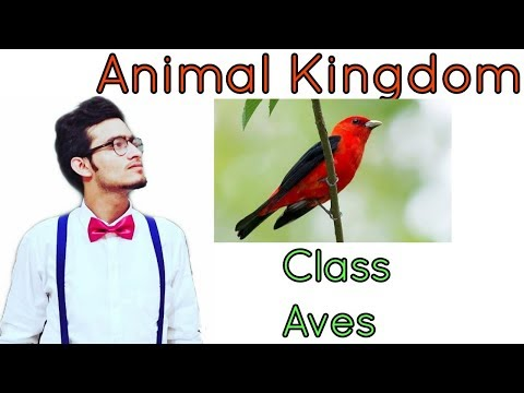 Animal kingdom: Class Aves (Birds) in detail
