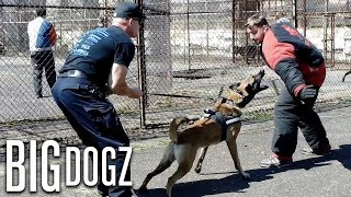 Training The World's Toughest Police Dogs | BIG DOGZ by Barcroft Animals